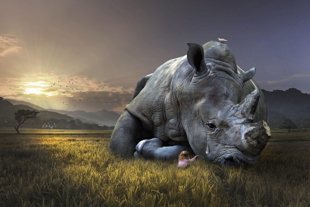 rhino-hanoi-vietnam